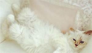Choupette Chat Karl : choupette le chat de karl lagerfeld vous n 39 y chapperez pas l 39 express styles ~ Medecine-chirurgie-esthetiques.com Avis de Voitures