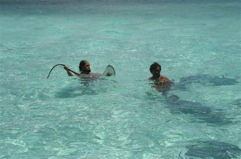 Sting Rays Picture Of Bora Bora Society Islands