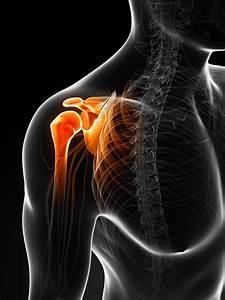 Diagram Of Shoulder