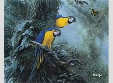Animierte Tier Gifs Papageien GifParadies