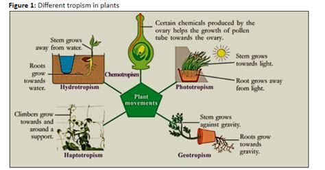 Plants respond to various stimuli by A Shedding leaves class 11 biology CBSE