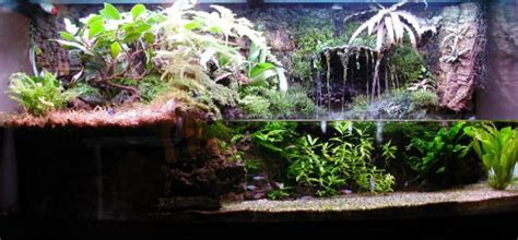 land and water aquarium diy terrarium waterfall search pets the o jays waterfalls and terrarium