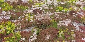 Extensive Dachbegrünung Pflanzen : stein auf stein extensive dachbegr nung eine wiese auf dem dach ~ Frokenaadalensverden.com Haus und Dekorationen
