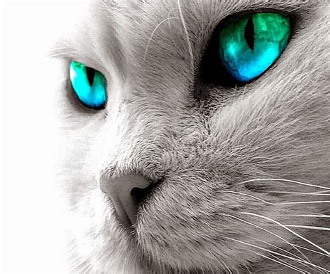 Animated Cat Hd Wallpapers 2017