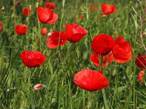 picture summer garden nature flower grass field