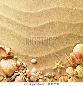 Sea Shells with Sand as Background Image - cg1p9192193c