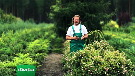 Augusta mēneša augs - klinšrozīte - YouTube