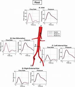 Flow Rate And Pressure Under Resting Conditions At The