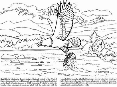 Coloring Pages Wildlife Alaskan Dover Publications Wood