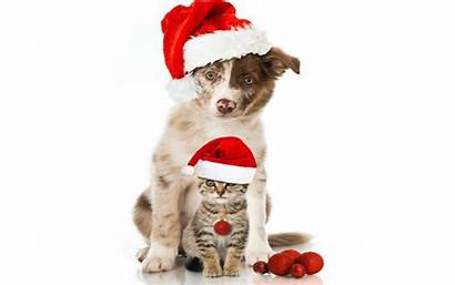 Christmas Dog Background Desktop Backgrounds Merry Tree