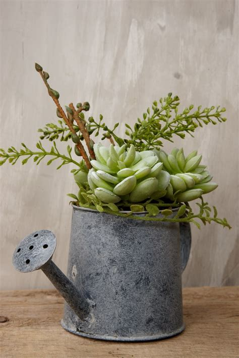 watering succulents 1463 best vintage metal watering cans images on pinterest watering cans vintage metal and