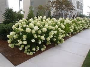 arkansas ornamental shrubs