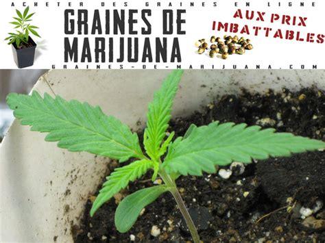 lumi 232 re graines de marijuana