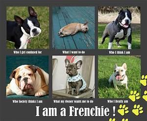 Funny French Bulldog Meme