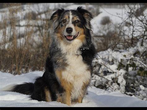 longest living dog breeds boldskycom