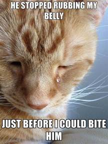 just cats 30 hilariously heartbreaking world cat problems that