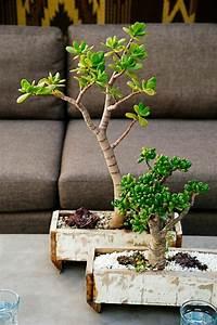 Bonsai Arten Für Anfänger : die besten 25 bonsai indoor ideen auf pinterest bonsai bonsai obstbaum und mini terrarium ~ Sanjose-hotels-ca.com Haus und Dekorationen