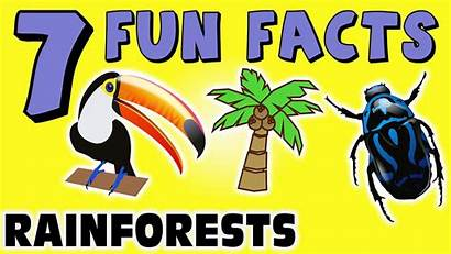Rainforest Facts Fun Rainforests Frogs Learning Funny