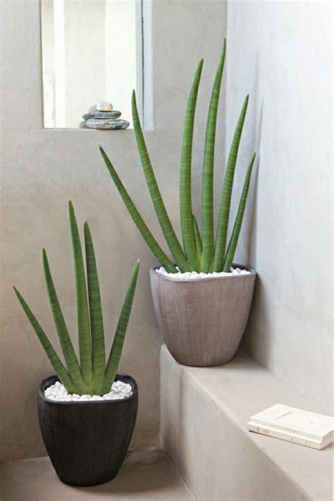 feng shui pflanzen ueber die schutz und komfortfunktion