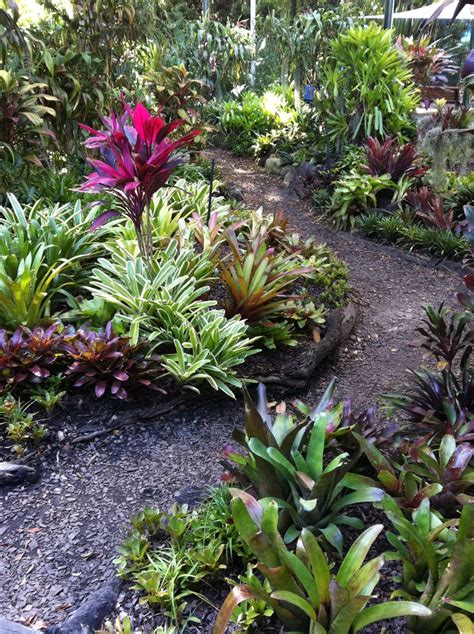 bromeliads australia nursery 17 best images about bromeliads on pinterest gardens tropical gardens and flower