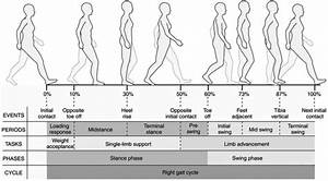 Subdivision Of The Gait Cycle Compares Periods Of Single