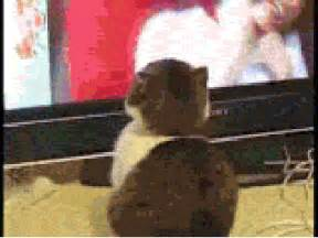 tv for cats cat tv gif images