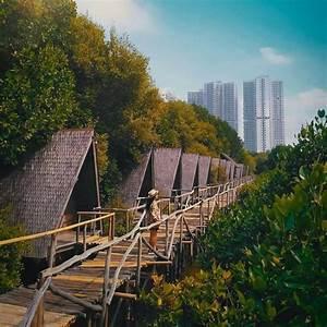 Hutan Mangrove Cantik Di Jakarta Dan Bekasi  Lokasi Ngadem