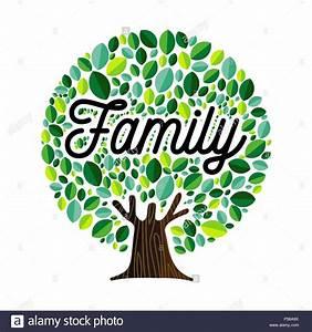 Family Tree Genealogy Illustration Stock Photos  U0026 Family