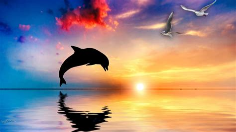 Animated Dolphin Wallpaper Free - animated dolphin screensavers wallpaper 46 images