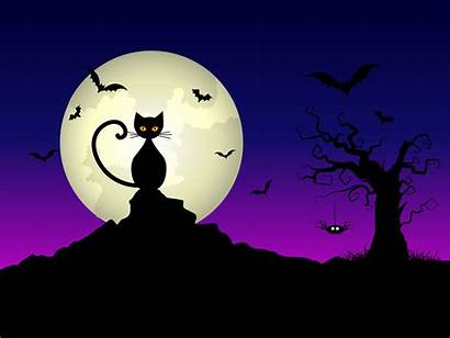 Halloween Background Night Vector Silhouette Witch Cat