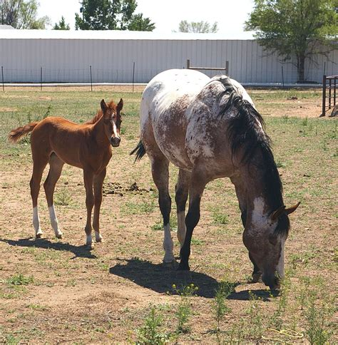 Horse Newborn Baby Horses