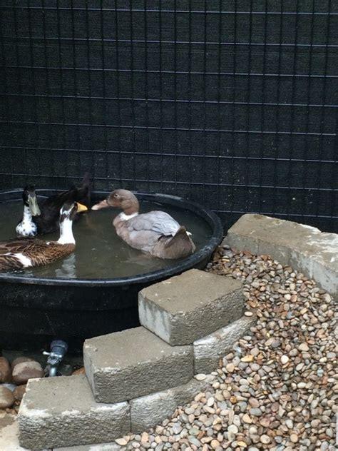 making  duck pond thriftyfun