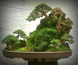 Bonsai Im Glas : die 25 besten bonsai wald ideen auf pinterest bonsai bonsai und bonsai garten ~ Eleganceandgraceweddings.com Haus und Dekorationen