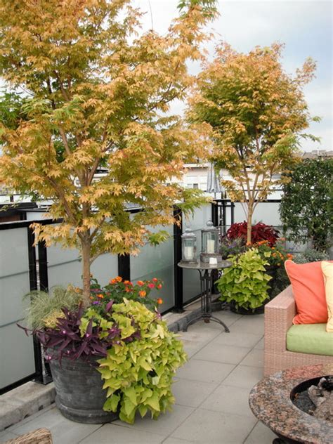 potted trees for patio rooftop terrace contemporary patio vancouver by 4373
