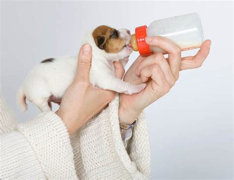 White Stools In Newborn Kittenspuppies What Does It Mean