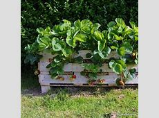 9+ Recycled Projects and Ideas for your Garden • Lovely Greens