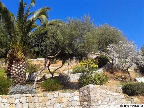 Delightful Amenager Un Jardin En Pente #1  Am233nager Un