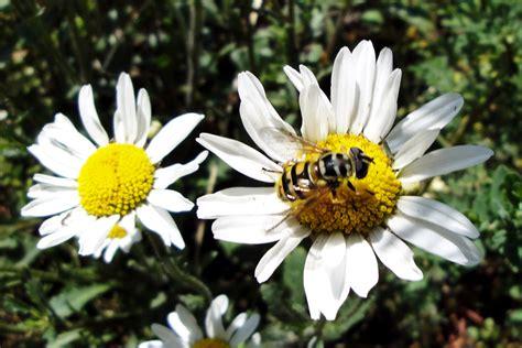 galerie fotos blumen mit insekten webseite eric meeuwsen