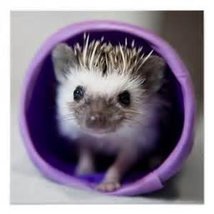 Sweet Baby Hedgehog