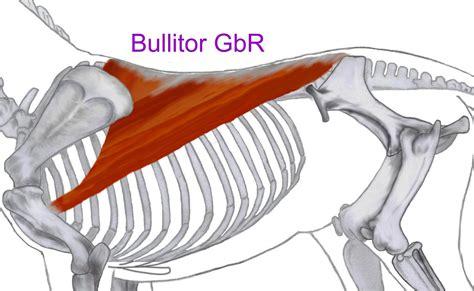 Muskeln Aufbauen Pferd