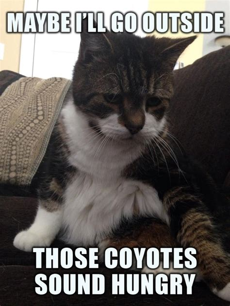 Depressed Cat Meme - hopelessly depressed cat feeling a bit suicidal today meme guy