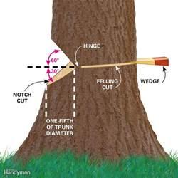 cut a tree safely the family handyman