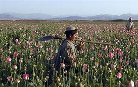 The UN are very worried about Afghanistan driving the heroin market in the  west. The UN which hosted Trumpers and so many other people who have  colluded ... af85fa55e99cf