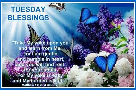 shining light tuesday blessings butterfly tuesday tuesday