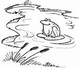 Lake River Activities Pond Dipping Coloring Pages Howstuffworks Explore Outdoors Ecosystem Crafts Science Let Tlc sketch template