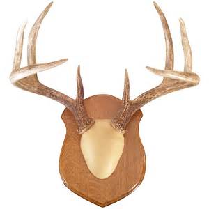 antler mounting kits antler mounting kits deer whiskey legends rachael edwards