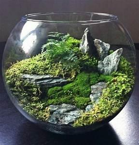 Pflanzen Für Terrarium : ber 40 vorschl ge wie sie ein terrarium selber bauen ~ Orissabook.com Haus und Dekorationen