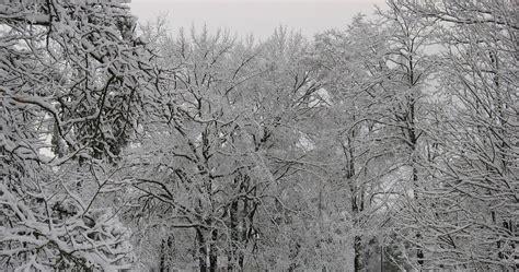photo winter trees snow ice season  image