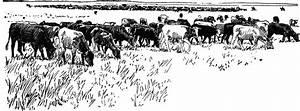 Herd Of Cattle Clipart