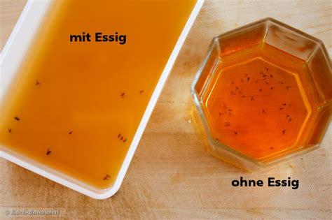 fruchtfliegenfalle selber machen ohne essig fruchtfliegenfalle hochwirksam ohne essig vergleich